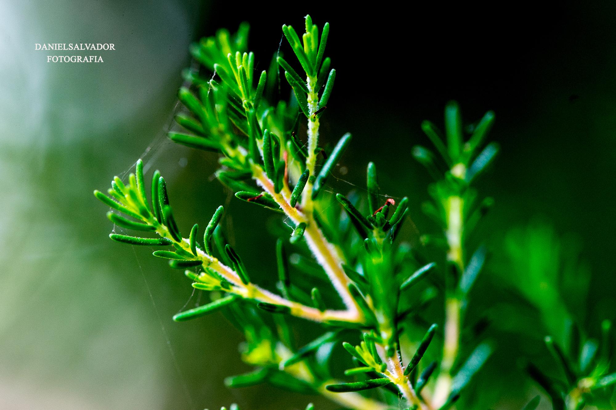 Árboles y plantas. @Daniel Salvador fotografía