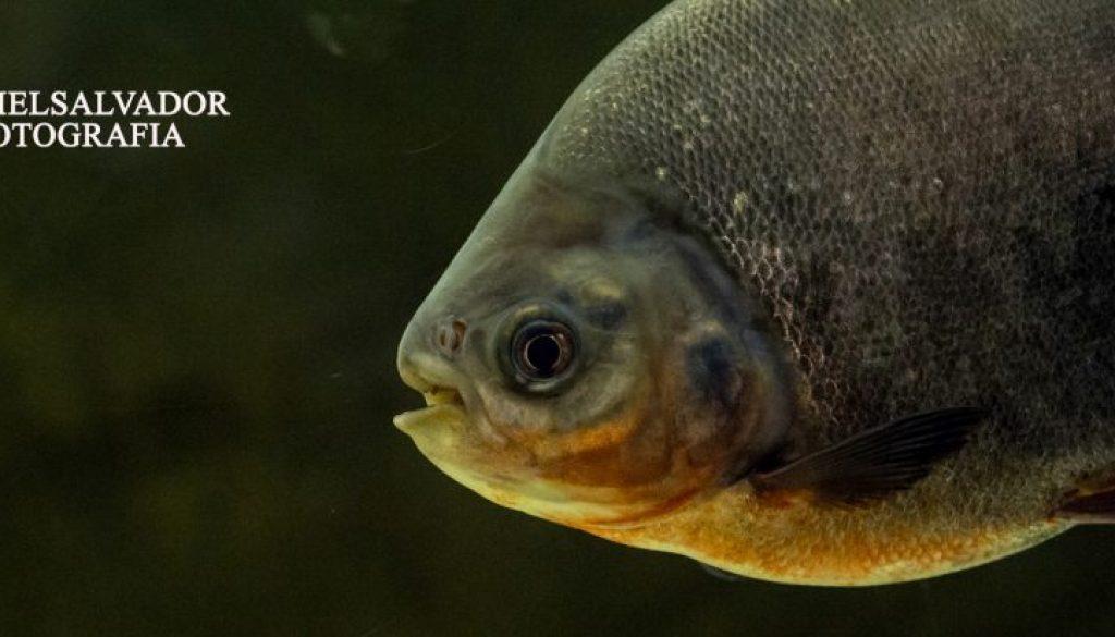 acuario sevilla-25