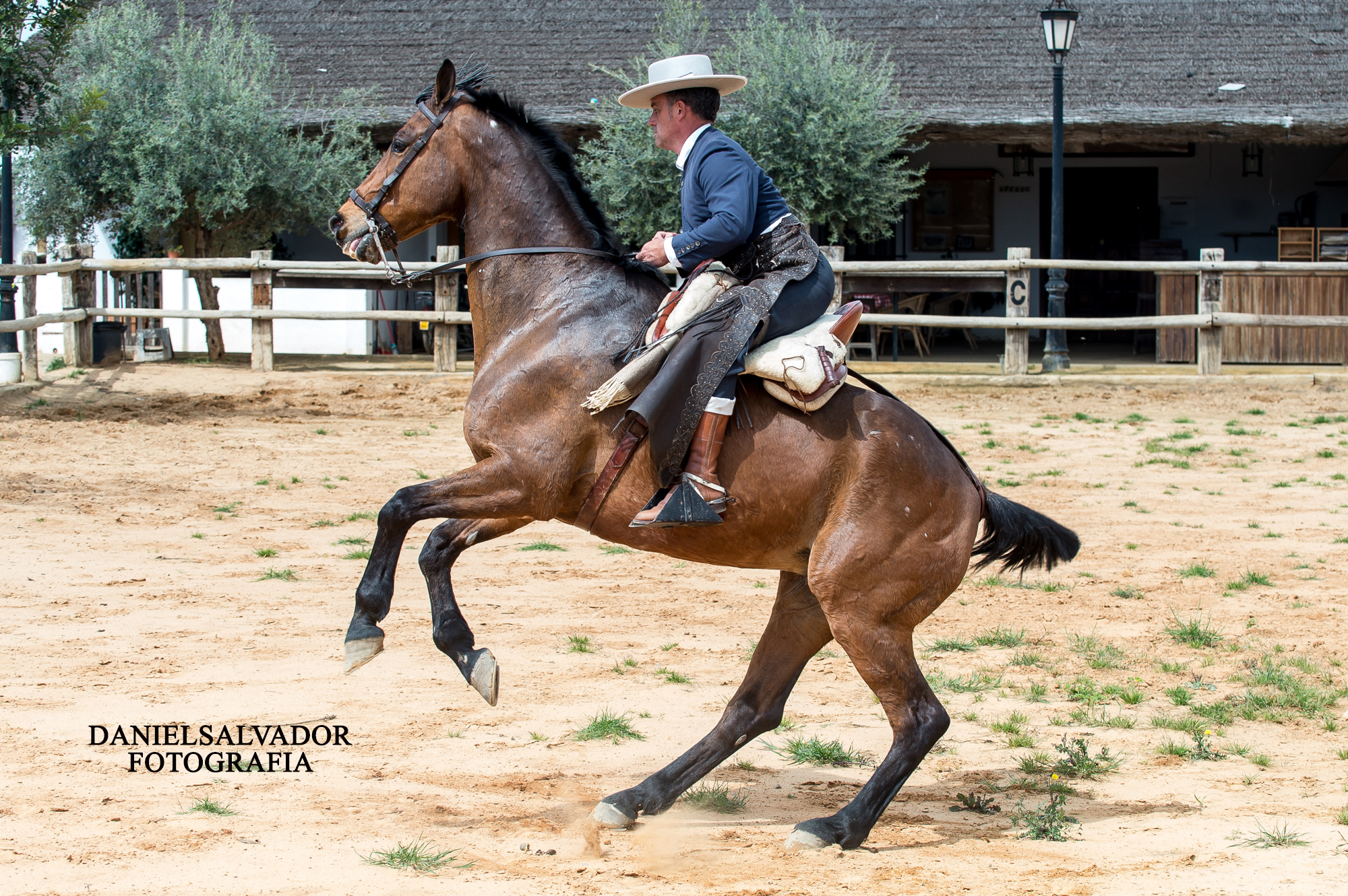 caballos-240