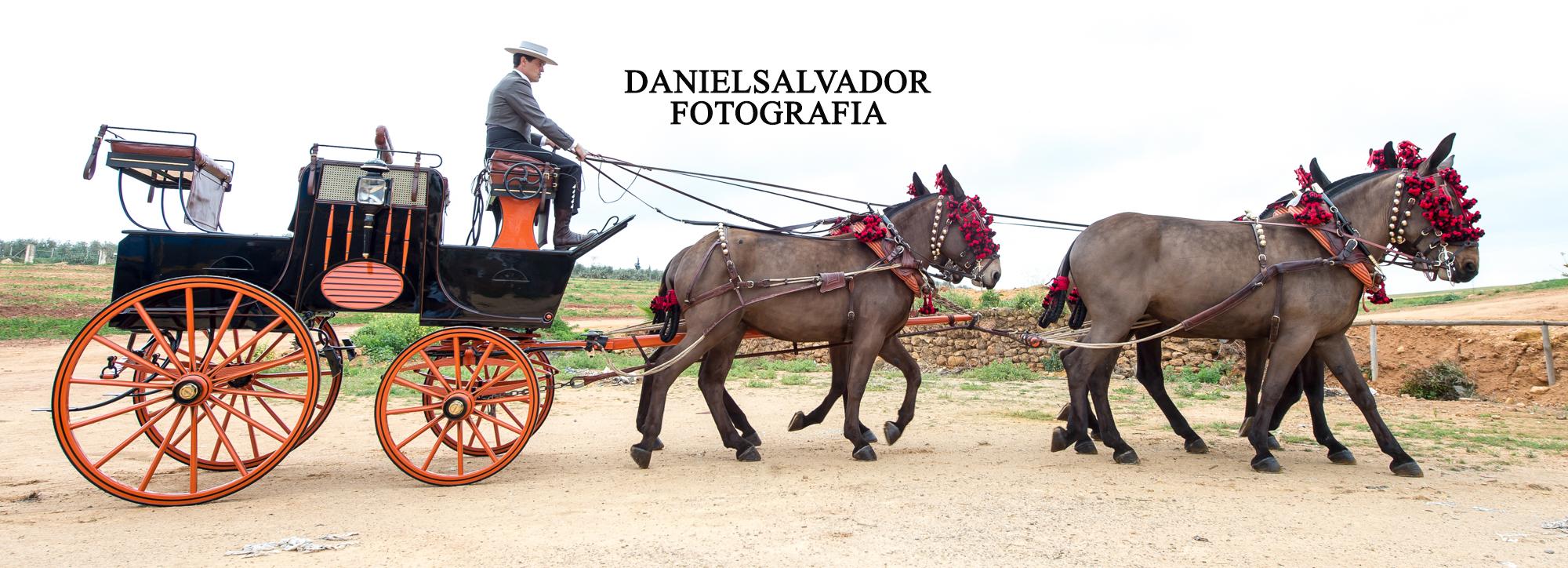 caballos-160