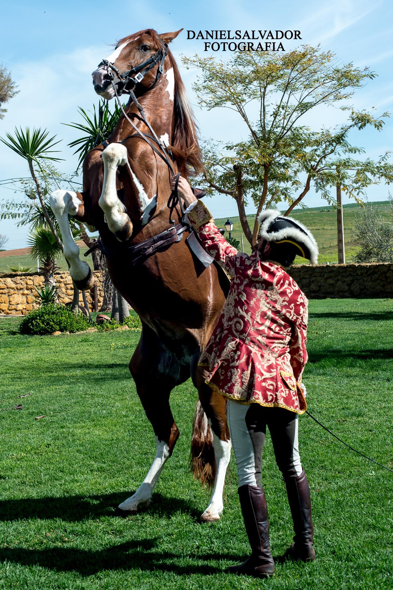 caballos-338
