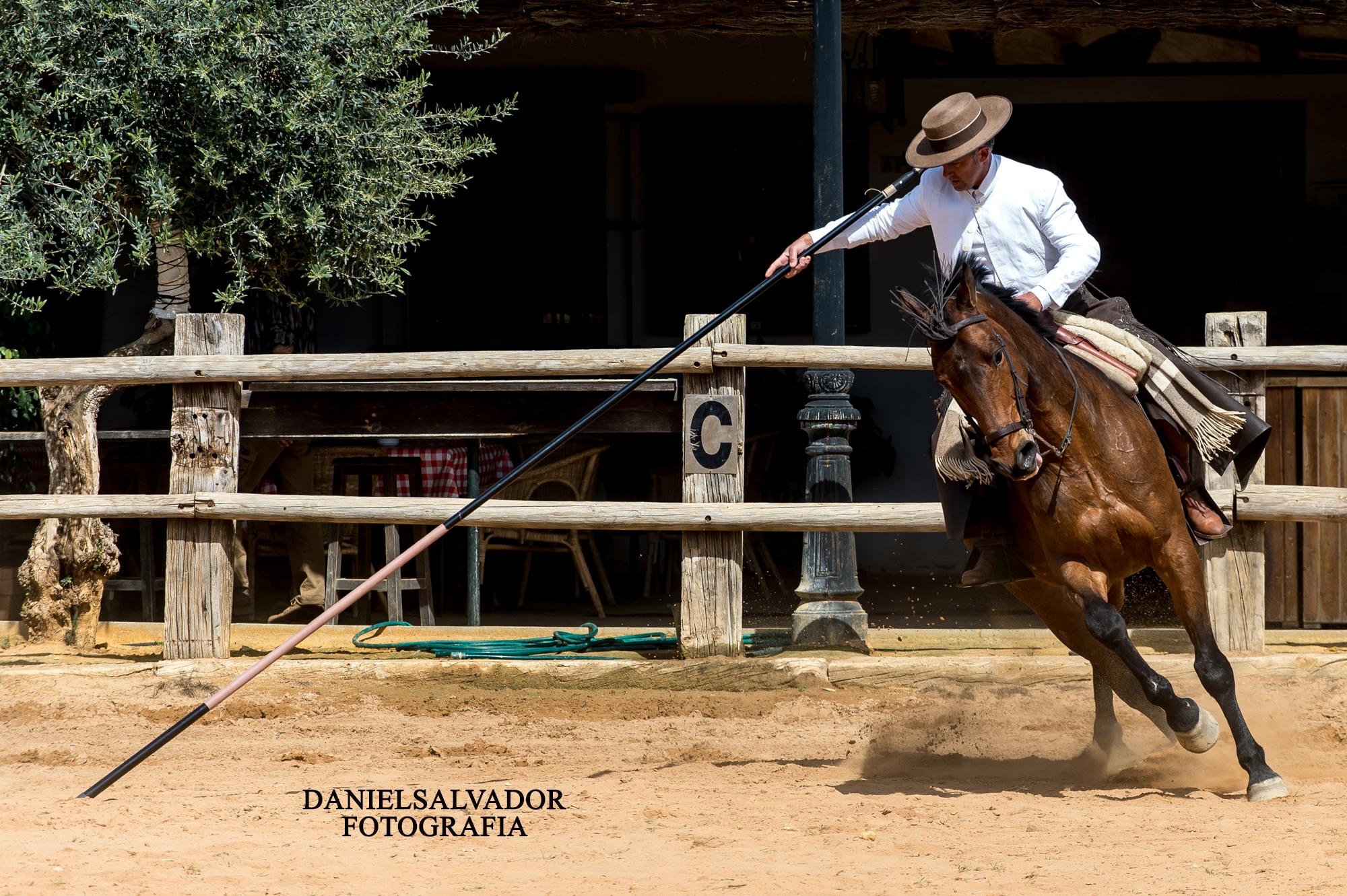 caballos-463